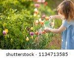 little girl watering beautiful... | Shutterstock . vector #1134713585