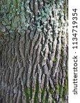 tree trunk. oak               ...   Shutterstock . vector #1134719354