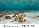 coral under water in the sea | Shutterstock . vector #1134723911