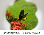 tropical yellow and black... | Shutterstock . vector #1134740615