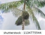 super food. amazon  acai berry... | Shutterstock . vector #1134775544