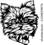 yorkshire terrier yorkie lap... | Shutterstock .eps vector #1134829874
