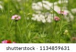 flowers bloom green | Shutterstock . vector #1134859631