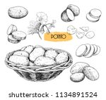 potato sketches collection.... | Shutterstock .eps vector #1134891524