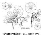a set of sketches of potato... | Shutterstock .eps vector #1134894491