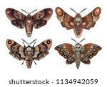 moth set traditional tattoo... | Shutterstock .eps vector #1134942059
