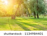 beautiful sunny park with... | Shutterstock . vector #1134984401