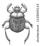 sacred beetle of scarabs tattoo ... | Shutterstock . vector #1135045115