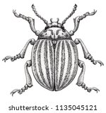 colorado potato beetle tattoo... | Shutterstock . vector #1135045121