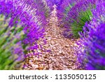 provence  france. close up... | Shutterstock . vector #1135050125
