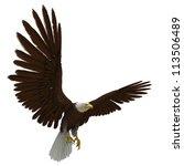 Eagle White Background