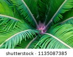 green tropical leaves texture... | Shutterstock . vector #1135087385