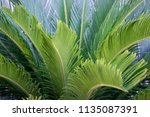 green tropical leaves texture... | Shutterstock . vector #1135087391