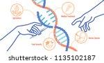 crispr cas9 targeted genome... | Shutterstock .eps vector #1135102187