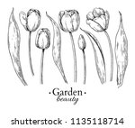 tulip flower and leaves drawing.... | Shutterstock .eps vector #1135118714