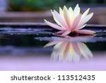 Stock photo lotus 113512435
