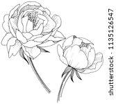 peony flower in a style... | Shutterstock . vector #1135126547