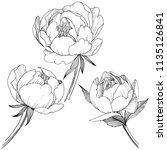 peony flower in a style...   Shutterstock . vector #1135126841