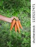 organic homemade vegetables in... | Shutterstock . vector #1135217471