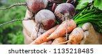 organic home vegetables carrots ... | Shutterstock . vector #1135218485