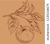 hand drawn apple and leaves... | Shutterstock .eps vector #1135218674