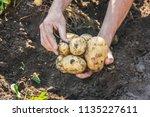 organic homemade vegetables in... | Shutterstock . vector #1135227611