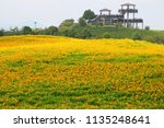 daylily flowers blooming in... | Shutterstock . vector #1135248641