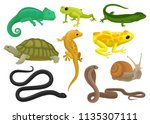 Stock vector reptile and amphibian set chameleon frog turtle lizard gecko triton vector illustration on a 1135307111