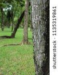 tree bark closeup with green... | Shutterstock . vector #1135319861