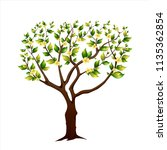 blossoming spring tree. cherry. ... | Shutterstock . vector #1135362854