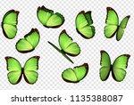 Butterfly Vector. Green...