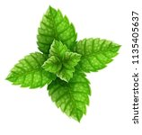 mint green leaves top view.... | Shutterstock .eps vector #1135405637
