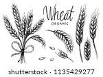 wheat ears. vector illustration | Shutterstock .eps vector #1135429277