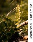 gold color nature wellness...   Shutterstock . vector #1135474655
