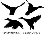 illustration with ducks... | Shutterstock .eps vector #1135499471