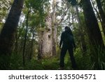 Small photo of A girl admiring Te Matua Ngahere with a girth just over 16 metres, a giant kauri (Agathis australis) coniferous tree in the Waipoua Forest of Northland Region, New Zealand.