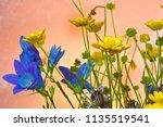 a bouquet of wild flowers. | Shutterstock . vector #1135519541