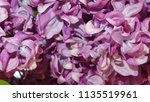 blooming pink lilac flowers  ...   Shutterstock . vector #1135519961