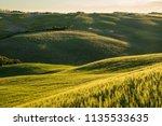 beautiful sunlit rolling hills. ... | Shutterstock . vector #1135533635