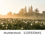 spring scene of a meadow with... | Shutterstock . vector #1135533641