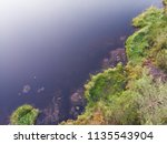 shore of a forest lake ... | Shutterstock . vector #1135543904