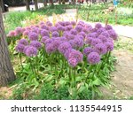 Small photo of Purple flowers image