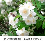 Small photo of White fruit tree flower