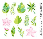tropical collection with exotic ... | Shutterstock .eps vector #1135561835
