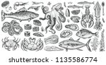 seafood vector illustrations.... | Shutterstock .eps vector #1135586774