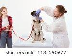 male veterinarian opens dogs... | Shutterstock . vector #1135590677