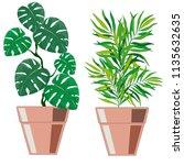 indoor plants in the pot on a... | Shutterstock .eps vector #1135632635