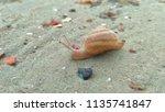 Sea Snail Love The First Rainy...