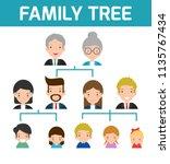 family tree  diagram of members ... | Shutterstock .eps vector #1135767434