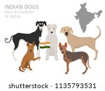 dogs by country of origin.... | Shutterstock .eps vector #1135793531